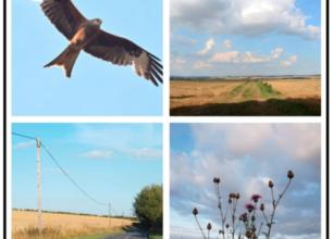 Village Views – Aug Featured Image